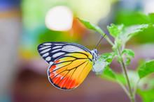 Beautiful Butterfly Sitting On Green Leaf