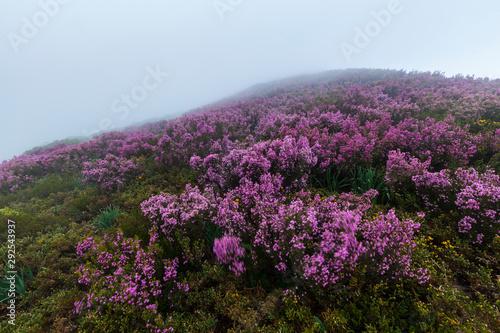 Fototapeta The Natural Park of Fuentes del Narcea, Degaña e Ibias, Asturias, Spain, Europe obraz na płótnie