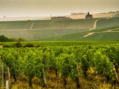 Francia, Borgogna, i vigneti del vino  Chablis. Fototapete