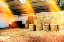 Bales Of Straw Are Folded In T...