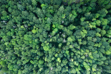 Drone Shot Above The Trees In ...