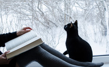 Reading Woman With Black Cat