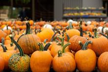 Decorative Orange Pumpkins On ...