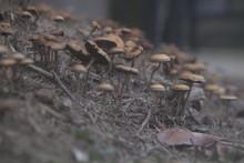 Close-up, Mushrooms At The Beg...