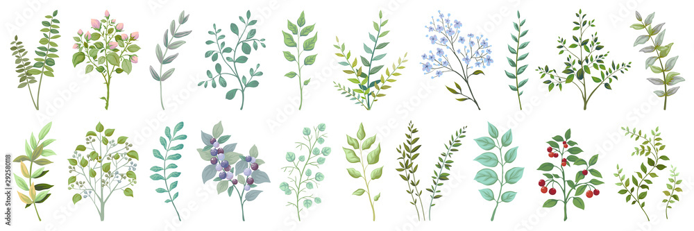 Fototapeta Greenery elements. Leaves branches foliage and berry wedding plants, vintage nature botanical collection. Vector illustrations exotic green garden bouquet on white background for invitation