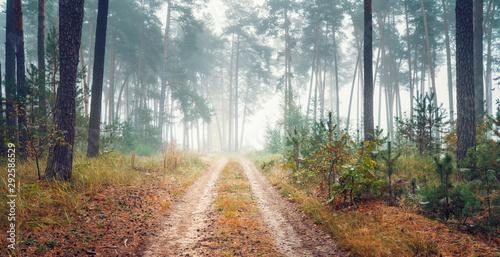 Foto auf AluDibond Dunkelgrau Road through foggy autumn forest