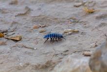 Blue Bug In Desert