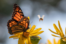 Bee And Butterfly