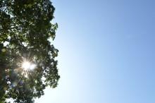 青空と木の緑と太陽