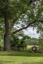 Tree In Backyard With Tire Swing