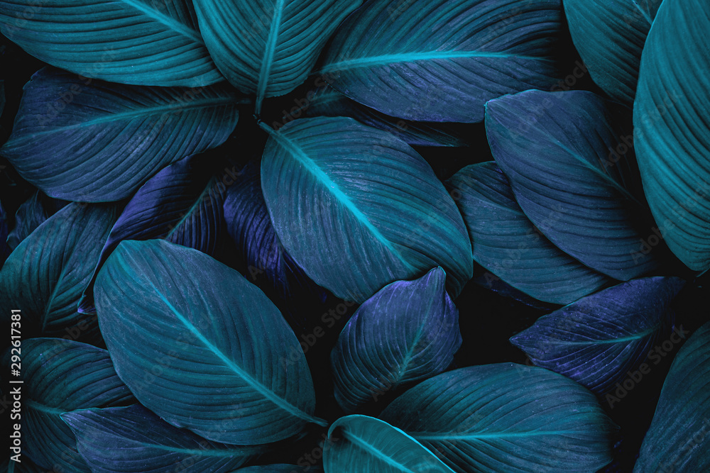 Fototapety, obrazy: abstract green leaf texture, nature background, tropical leaf