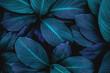 Leinwanddruck Bild - abstract green leaf texture, nature background, tropical leaf