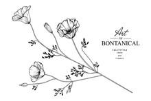 Sketch Floral Botany Collectio...