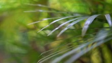 Blur Tropical Green Palm Leaves Abstract Background. Defocused Lush Foliage. Ecology, Summer And Zen Wellness Concept.