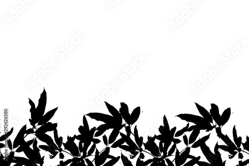 Fototapeta  dark tone of tree isolated on white background