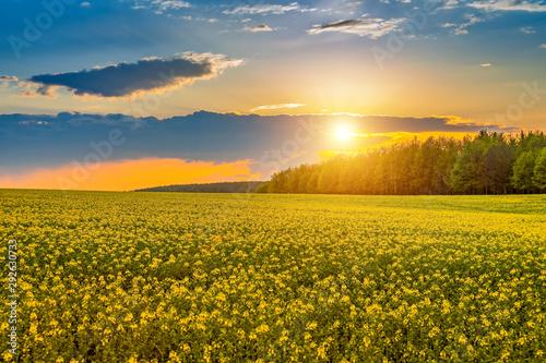 Obraz Piękny pejzaż z zachodem słońca nad polami rzepaku, Podlasie - fototapety do salonu