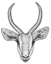 Gazelle Portrait Illustration,...