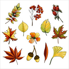 Vector set of hand-drawn leaves.