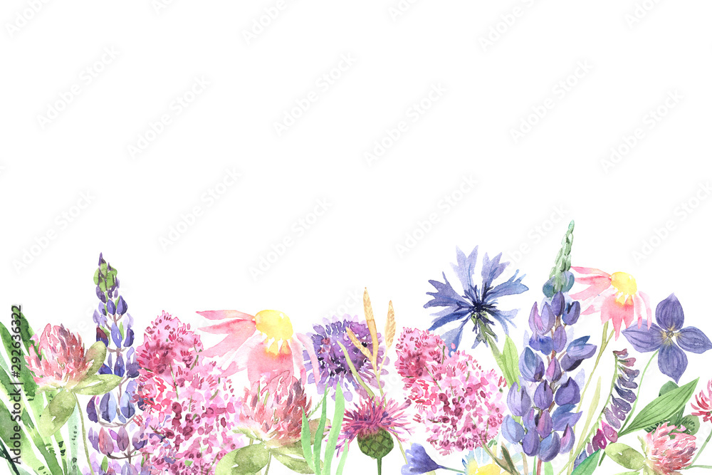 Fototapeta Watercolor hand painted wildflowers