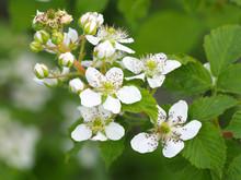 Beautiful In Spring Bloom Gard...