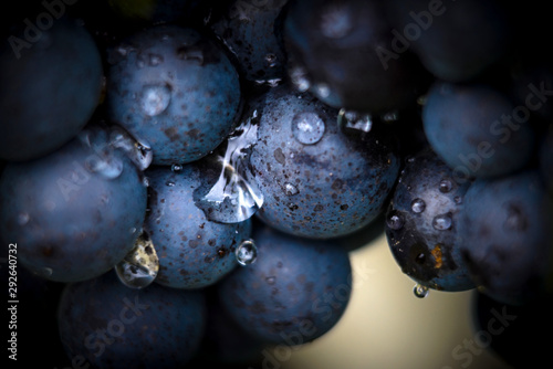 Door stickers Macro photography Gamay grapes on vines with lush green leaves
