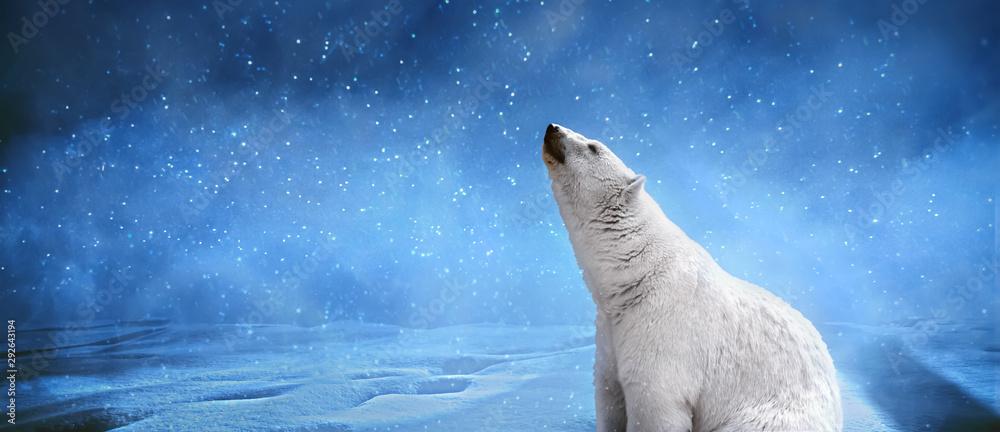 Fototapeta Polar bear,snowflakes and sky.Winter landscape with animals, panoramic mock up image