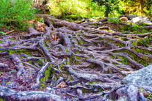 Roots, Rocks And Muddy Hiking ...