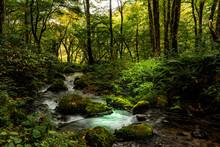 鳥取県・大山、木谷沢渓流