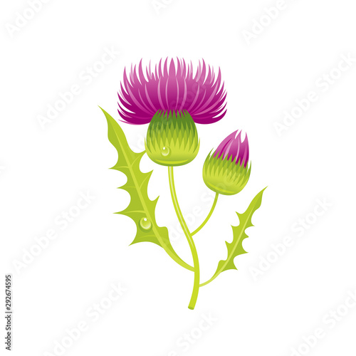 Leinwand Poster Thistle flower, floral icon