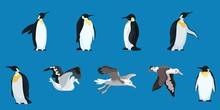 Albatrosses And Penguins Compi...