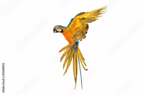 Tuinposter Papegaai Colorful flying parrot isolated on white background.
