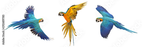 Set of macaw parrot isolated on white background - 292689780
