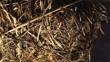 Haystack Close Up .Dry Branche...