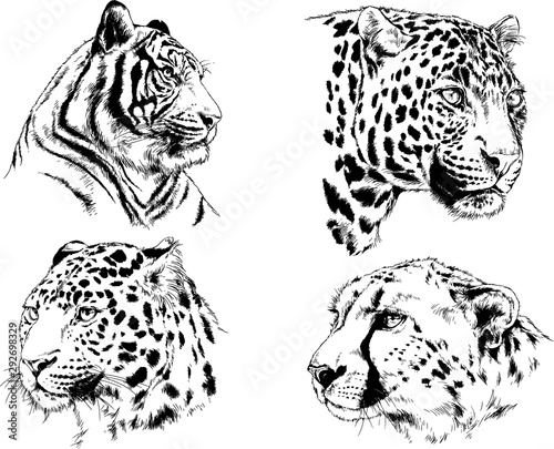 set of vector drawings on the theme of predators tigers are drawn by hand with i Wallpaper Mural