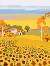 Countryside Farm With Sunflower Growing. Village Houses On Background. Yellow Sunset Sky. Autumn Season. Flat Cartoon Vector