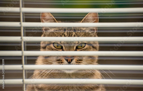 Portrait of a watching cat Canvas Print