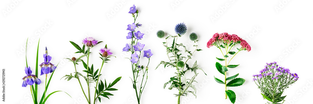 Fototapety, obrazy: Garden flowers collection