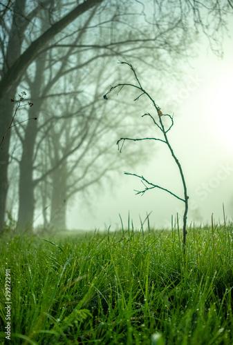 otoño con niebla Tablou Canvas