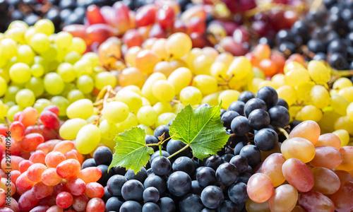 Fotografie, Tablou mix of colorful ripe grapes