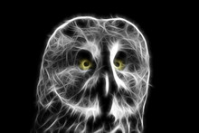 Fractal Image Of A Large Night Owl - A Bearded Owl On A Contrasting Black Background