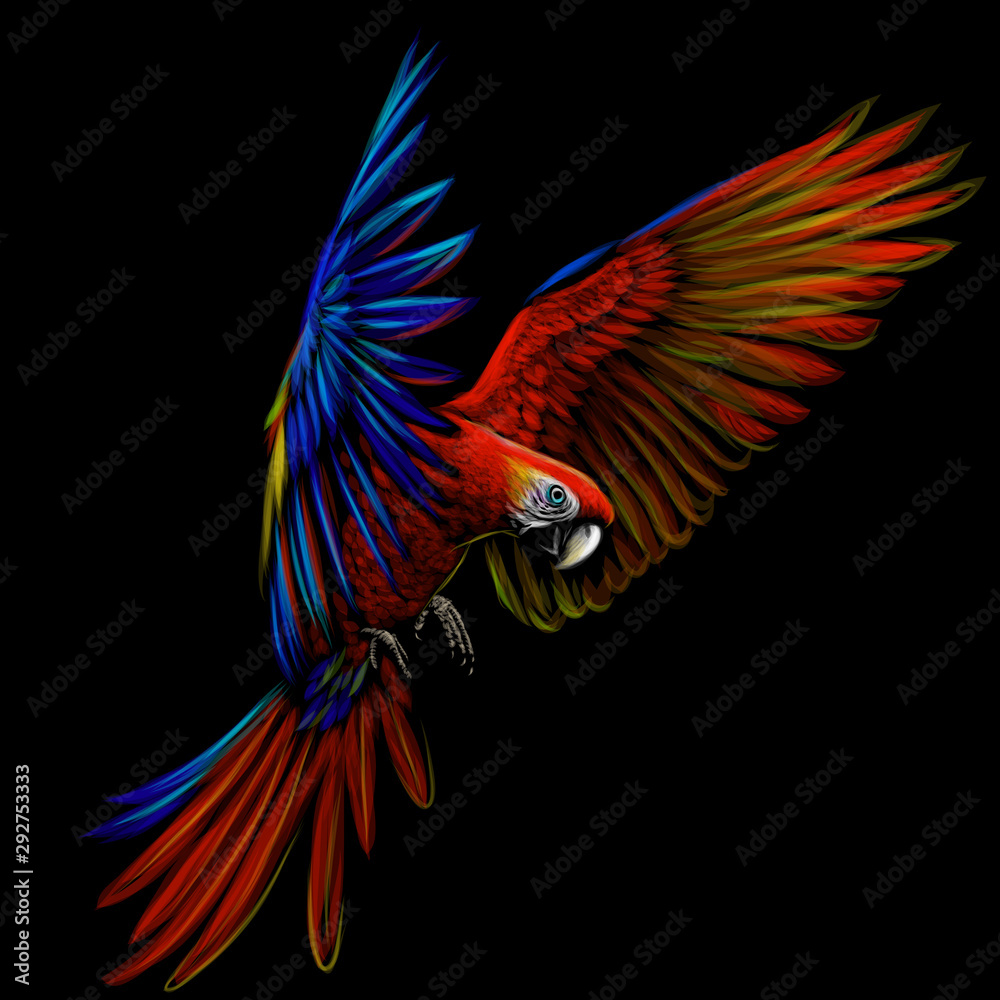 Fototapety, obrazy: Portrait of a macaw parrot in flight. Color image of a blue-red macaw parrot on a black background.