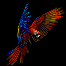 Portrait Of A Macaw Parrot In ...
