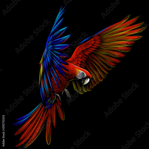 Naklejki papugi  portrait-of-a-macaw-parrot-in-flight-color-image-of-a-blue-red-macaw-parrot-on-a-black-background