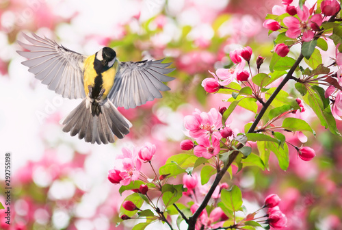 Foto portrait bird tit flies widely spreading its wings in the garden surrounded by p