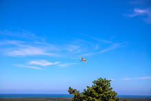 Seagull In Blue Sky With Sea L...