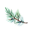 Hand drawn watercolor illustration of pine branch isolated on white background. Holiday design for greeting cards, calendars, posters, prints, invitations.