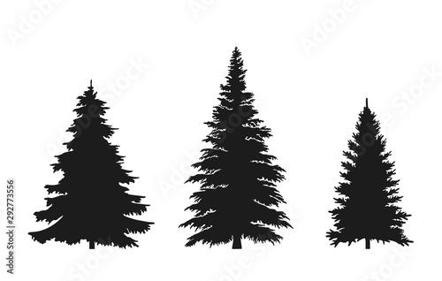 Fényképezés  set of fir tree silhouette