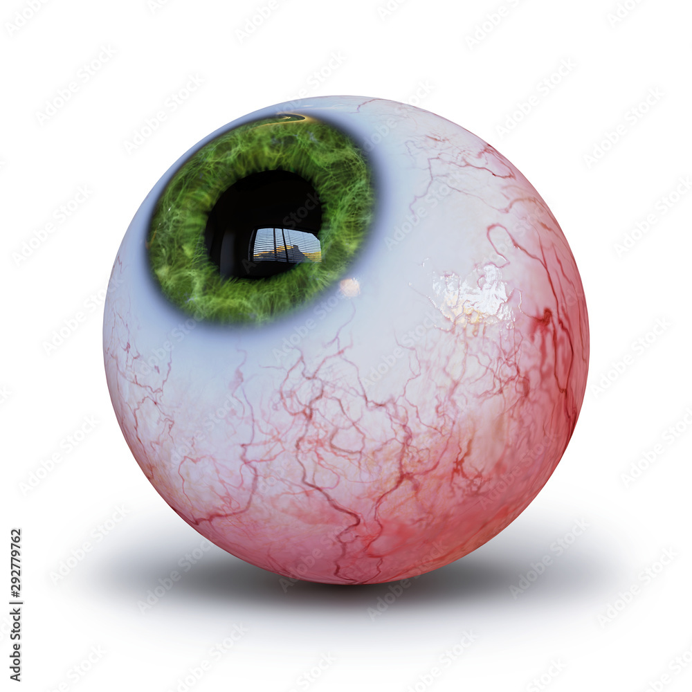 Fototapeta realistic human eyeball with green iris isolated whit shadow on white background