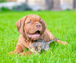 canvas print picture - Big mastiff puppy with tiny bengal kitten on green summer grass