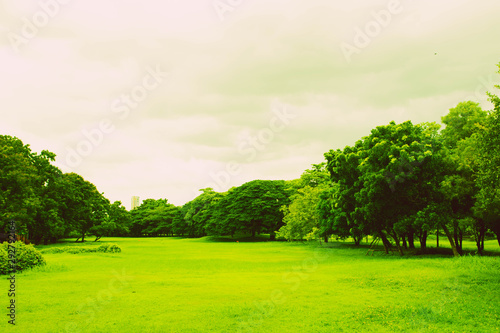 Foto auf AluDibond Lime grun Green park and grass in garden on urban city at summer. exercise and
